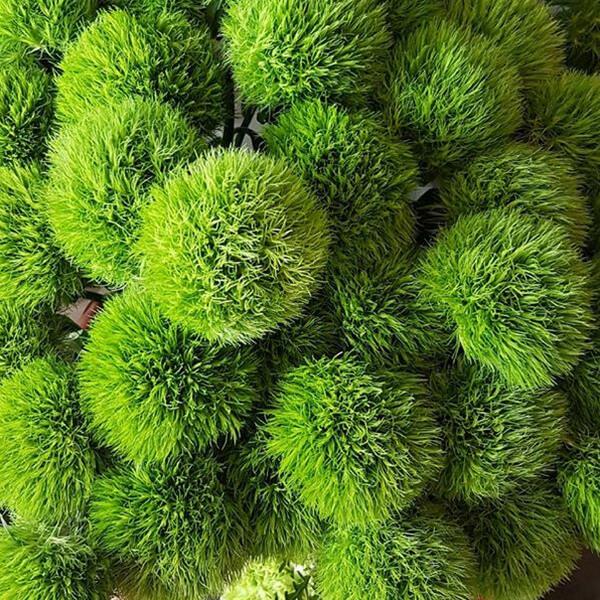 garofani green trick